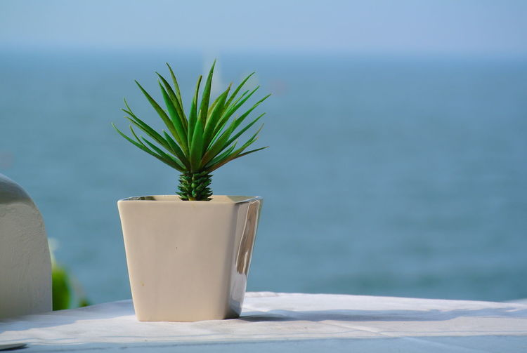 Small plant in ceramic vase on white table with blue sea as background with copy space.