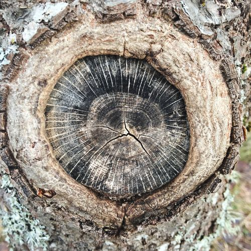 Textured  Close-up Tree Tree Trunk Cracked Wood - Material Tree Ring Nature Face Monkkey