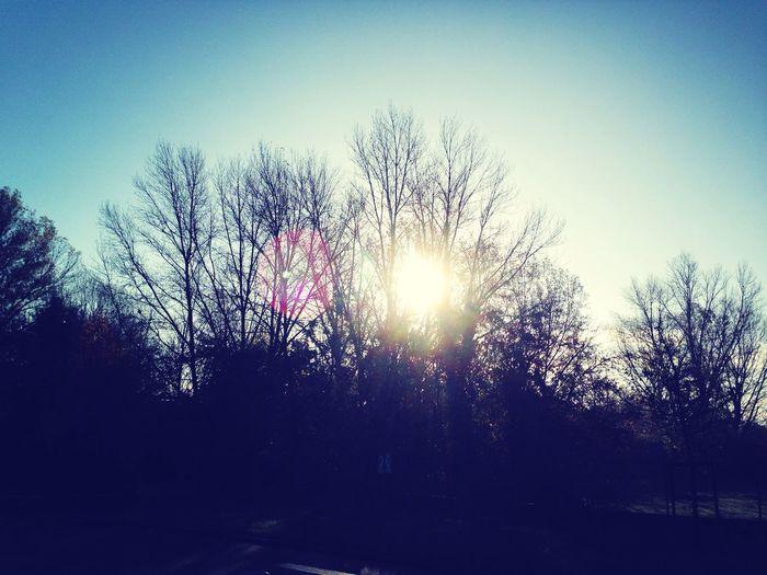 Backlight Sunlight Trees