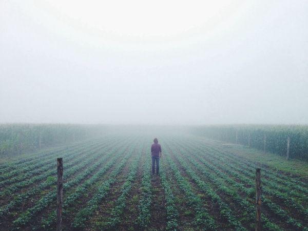 Foggy Morning VSCO EyeEm Best Shots Melancholic Landscapes