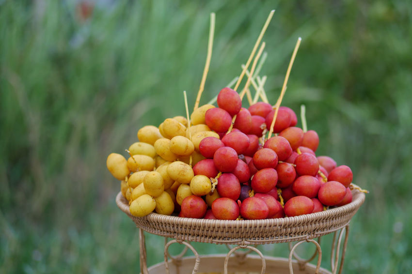 Date Palm Date Palm Date Palms Date Palm Tree Vine - Plant Fruit Red Agriculture Rural Scene Tree Hanging Close-up Food And Drink Date Hanging Light Red Grape Grove Fruit Tree