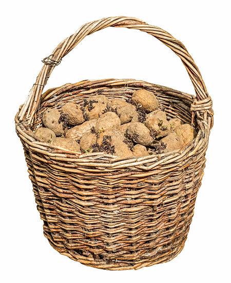 Harvested potatoes in an old wicker basket Old Wicker Wicker Basket Basket Potatoes Close-up Cut Out Day Food Food And Drink Freshness No People Picnic Basket Potatoes Potatoes Basket Potatoes Bulbs Shopping Basket Studio Shot Whicker White Background Wicker Wicker Baskets Wicker Basket