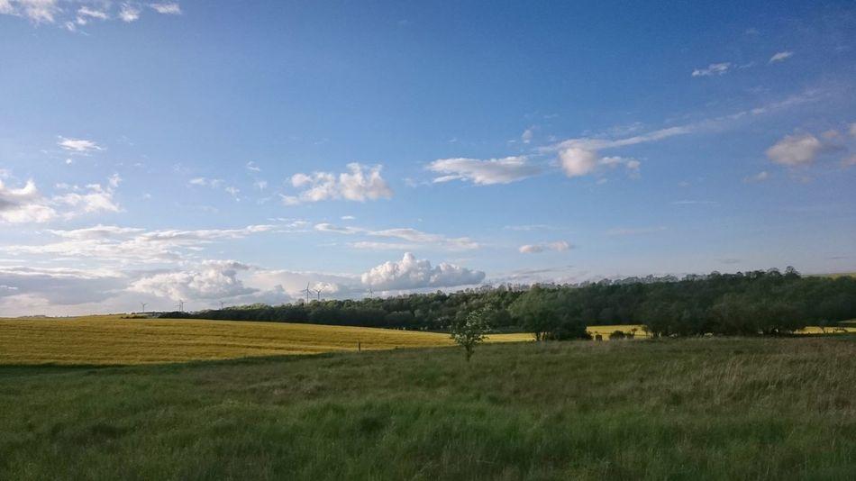 Dunkle Landschaft