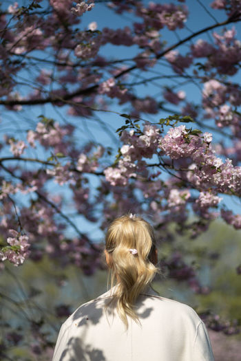 Rear view of woman on cherry tree