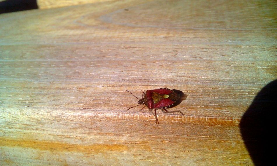 Bug Wodden Texture Taking Photos Relaxing Check This Out