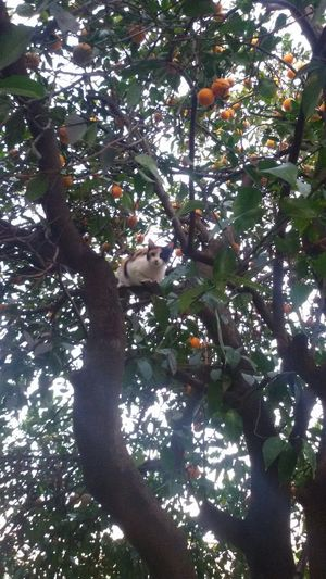 Trying to catch something Cat Tree Oranges Branches Leaves Green Freedom Afternoon