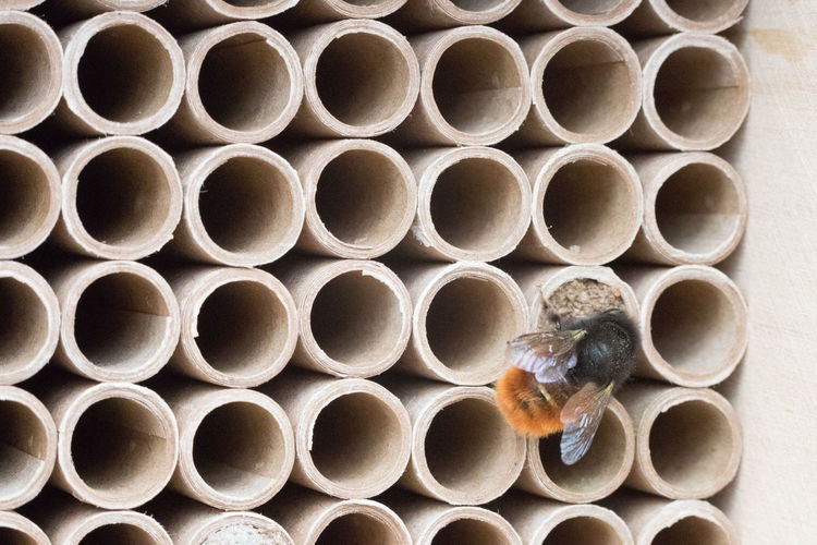 Animal Animal Themes Animal Wildlife No People Close-up Invertebrate Pattern Insect Full Frame Animals In The Wild Bee Backgrounds Shape Day Geometric Shape Large Group Of Objects APIculture Honeycomb Abundance Beehive