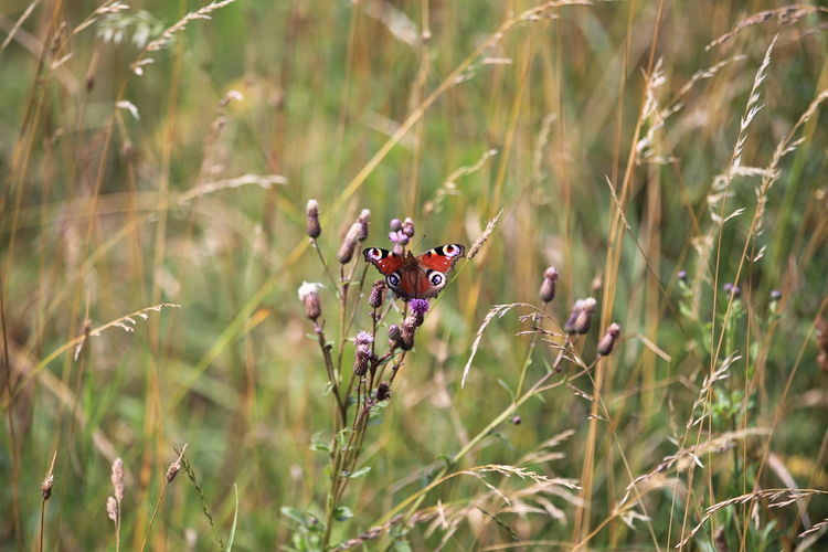 Beautiful red butterfly sitting on a plant