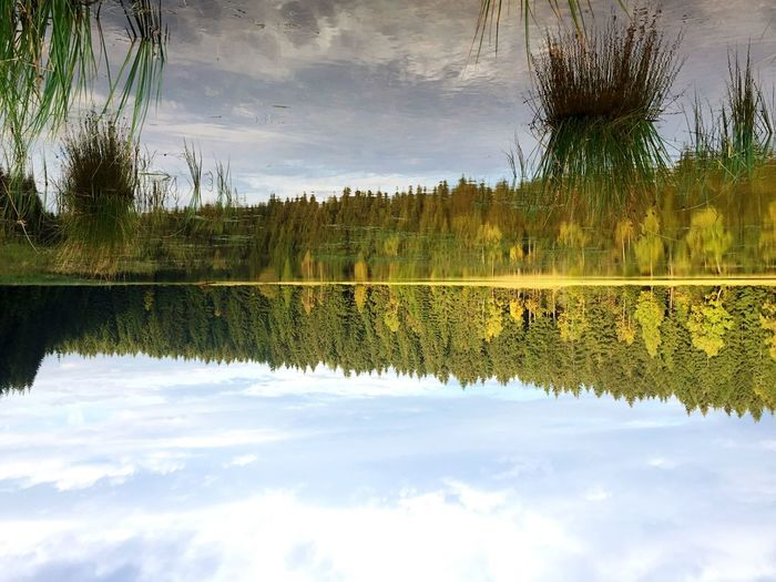 Scenic shot of reflection of trees in calm lake