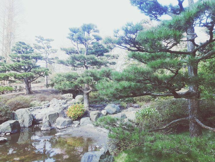 Zen Zen Rockery Zen Garden Zen Rocks Japanese Garden Pine Trees Chinese Garden Lantern Form Battenstein Gardening Garden Photography Garden Architecture Gartenglück Japanischer Steingarten Japanischer Garten