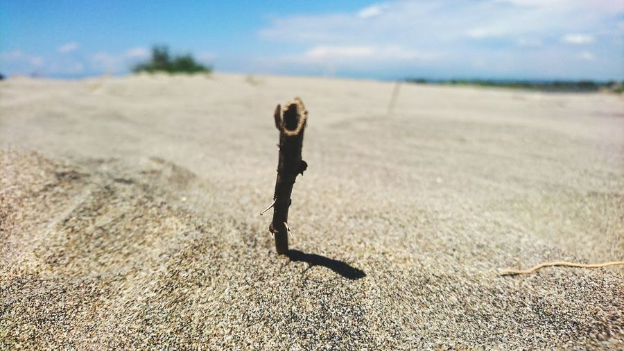 Close-up of stick on sand against sky