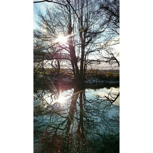Reflection Loves_reflection TreePorn Trunkilicious naturamentenatureloversnatureshotsrsa_naturefiftyshades_of_natureukpotdigers_derbyshireignaturecaptureig_britishisleshidden_ukcapturingbritaincapturingbritain_ruralbretbysplendid_shots