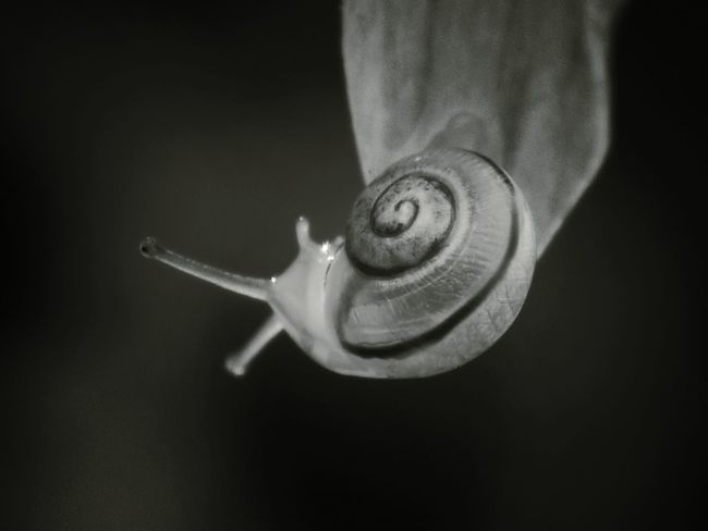 ...in bw... Macroclique Our Planet EyeEm Nature Lover Hanging Out