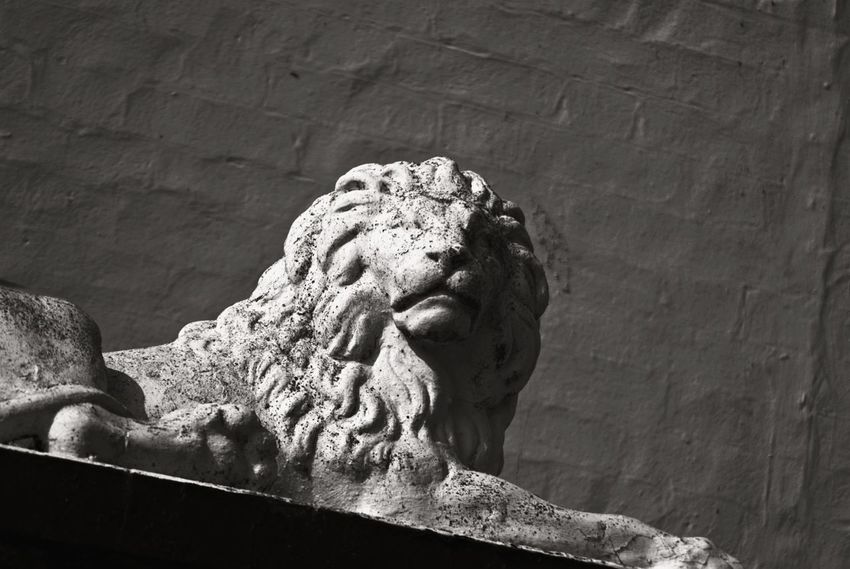 Lord of the Jungle Lion Statue Animal Black And White Close-up Jungle Lion - Feline Lions Mane Low Angle View Sculpture