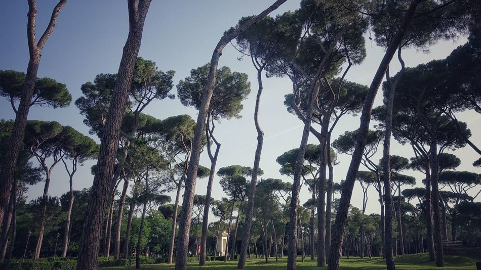 Beauty In Nature Blue Borghese Day Grass Green Green Color Growth Idyllic Italy Landscape Nature No People Non-urban Scene Outdoors Palm Tree Plant Rome Scenics Sky Tranquil Scene Tranquility Travel Destinations Tree Tree Trunk