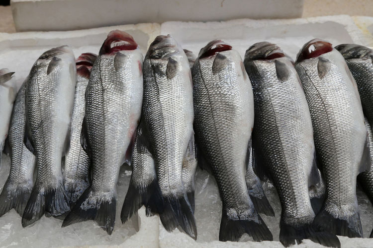 View of fish for sale in market