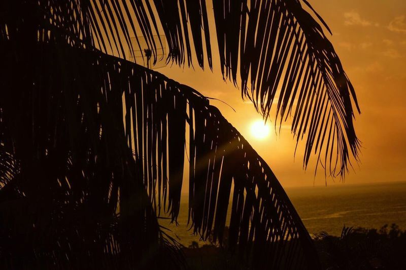 Sunset Palm Leaf Palm Tree Sky Nature Outdoors No People Silhouette Tranquil Scene Palm Frond Tranquility Beauty In Nature Sun Sea Scenics Beach Frond Tree curacao EyeEmNewHere