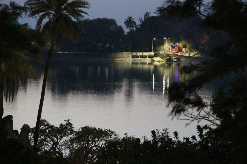 Green Color Beauty In Nature Colorful Flower Lake View Trees Mount Abu Rajasthan, India Night View No People
