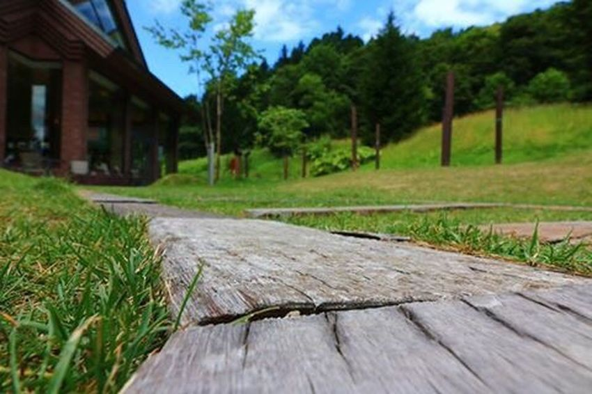 Green Grass Surface Level Wood - Material Wooden Built Structure Tree Growth Architecture Close-up Plank Focus On Foreground Nature Green Color Sky Day Outdoors Tranquility Tranquil Scene No People Beauty In Nature Canonphotography Like4like Japan