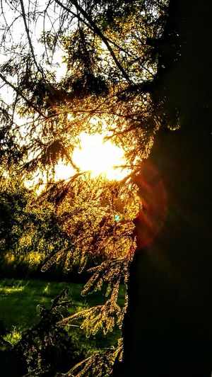 Against the Sunlight.. golden Moments... Outdoors No People Nature Water Sunlight Beauty In Nature Tree Day Lake Sky Green Color Wendland Forest Original Picture GetbetterwithAlex Tranquil Scene Beauty In Nature Sunbeam