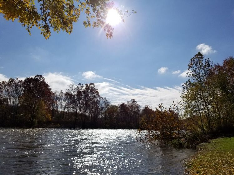 Tree Tranquil Scene Beauty In Nature Connellsville Fall Beauty Autumn Fall Colors Landscape Sunlight Leaf Fallen Leaves