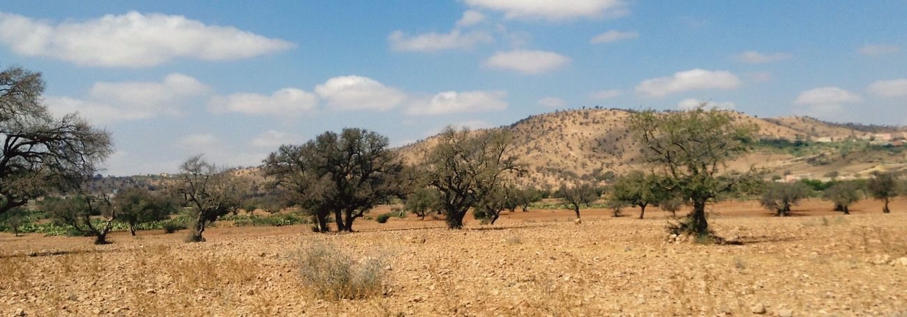 Argan trees Trees Argan ArganOil Desert Desert Beauty Enjoying Life Bled Clouds And Sky Agadir