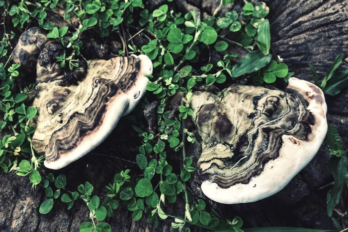 Blackground EyeEmNewHere EyeEm Nature Lover Plant Part Leaf Plant Growth Green Color Nature Day No People High Angle View Mushroom Tree Outdoors Wood - Material Land Forest Close-up Tree Stump Directly Above Fungus Tree Trunk