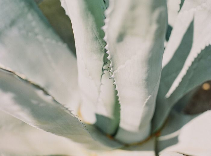 Trompez EyeEm Travel Destinations Filmphotography Italy Calabria Close-up Plant Textile No People Nature Full Frame Day Flower Beauty In Nature Focus On Foreground Outdoors