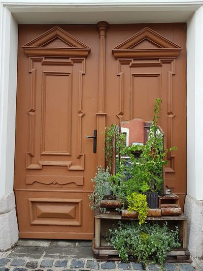 Street Photography Flower Art Door Wood Entrance