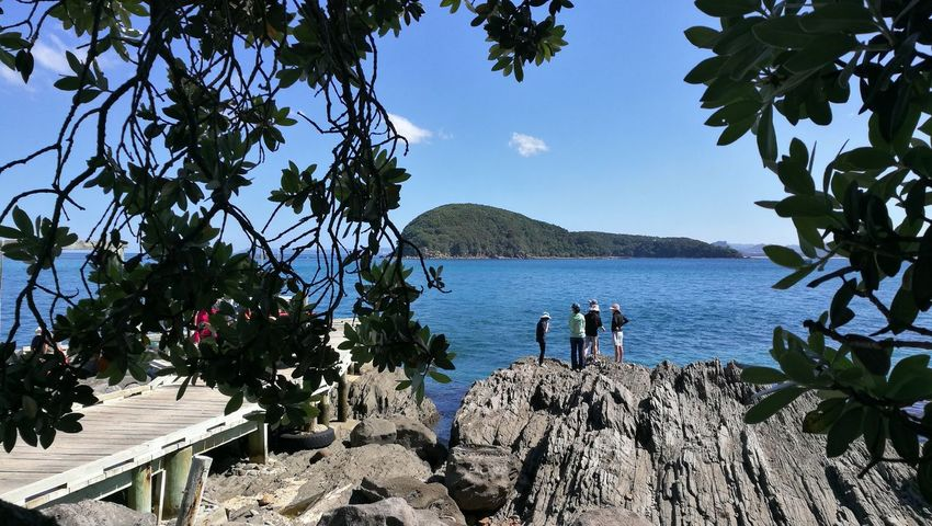 people on rock Slipper Island Group Of People Blue Sea Pohutukawa Wharf Tree Nature Outdoors Day Water Scenics Beauty In Nature Sea Vacations Sky