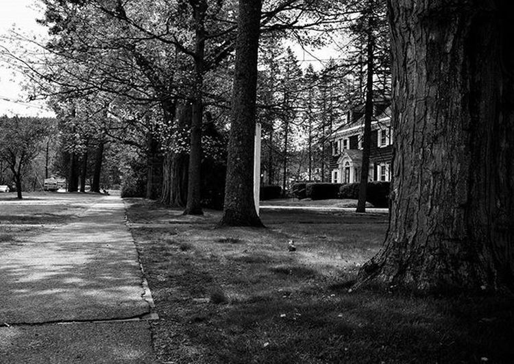 G u a r d e d . . . . . . Naturelover Nature_perfection Streetphotography Urbanexploration Citystreets Bnw_society Bnw_life Blackandwhitephotography Landscapes Victorian Newengland Photooftheday Igersbnw Illgrammers Exploremore Outdoorphotography Earthpix Monochrome Instagood Hot_shotz Gallery Visualsoflife Liveauthentic Tiny_collective Agameoftones newhampshire