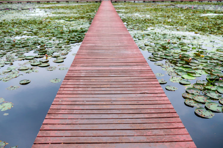 Wooden bridge in the lotus pond Plant Direction Nature Water Lake The Way Forward Day No People Footpath Beauty In Nature Floating Tranquility Diminishing Perspective Wood - Material Growth Outdoors Floating On Water Flower Water Lily Long