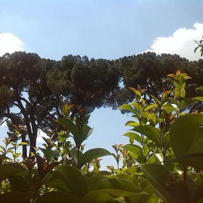 Barrafranca 2giugno Villa Comunale sky skyblue tree clouds ig_italia ig_sicilia skyporn treeporn igfriends_sicilia nature ig_nature photo photooftheday instalike instanature instaday like likeforlike like4like likeme followme followforfollow follow follow4follow popularphoto popularpic