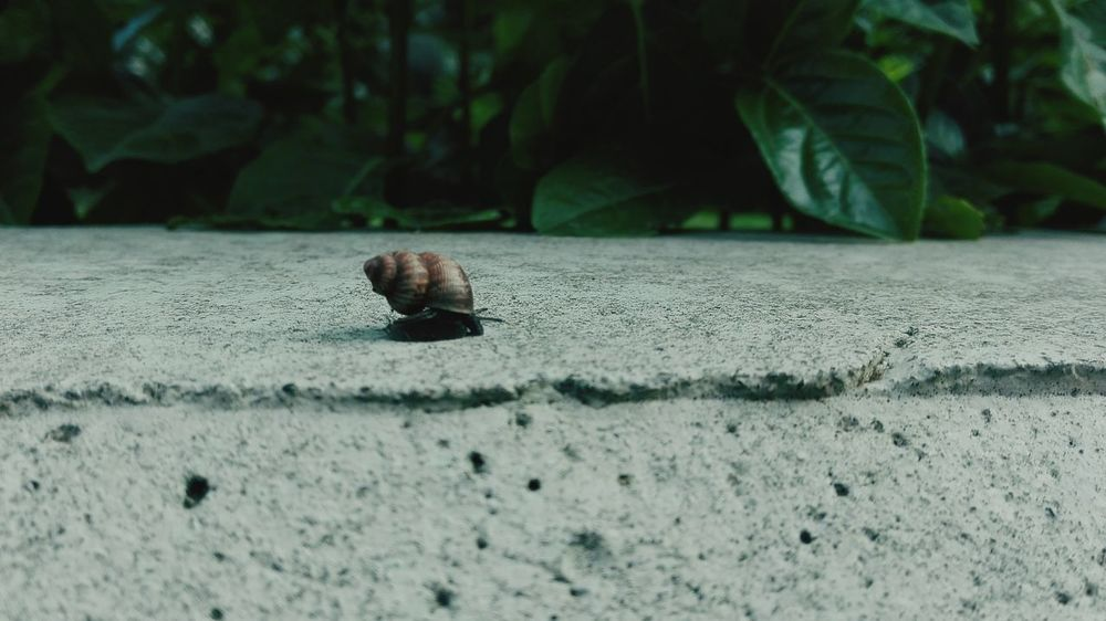 Snail's ride One Animal Animal Themes Animals In The Wild Wildlife Snail Animal Antenna Focus On Foreground Zoology Day Outdoors Nature Crawling Invertebrate No People Surface Level Tiny