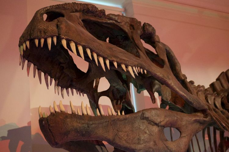 Dinosaur Animal