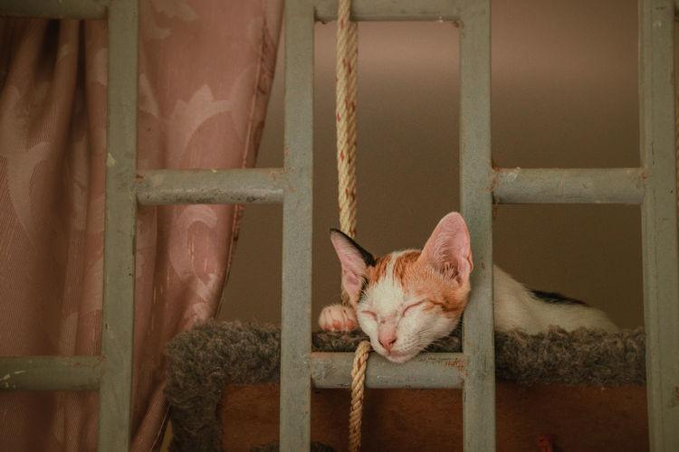 Portrait of cat relaxing on metal