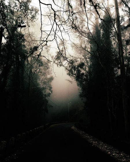 moodeira Solitude Road EyeEm Best Shots - Nature Market Copy Space Natural Beauty Nature Photography Nature_collection Nature Landscape_Collection Landscape EyeEm Nature Lover Madeira Island Madeira Moody Mood Foggy Fog Tree Plant Nature No People Beauty In Nature Water Growth Tranquility Tranquil Scene Forest Scenics - Nature Idyllic