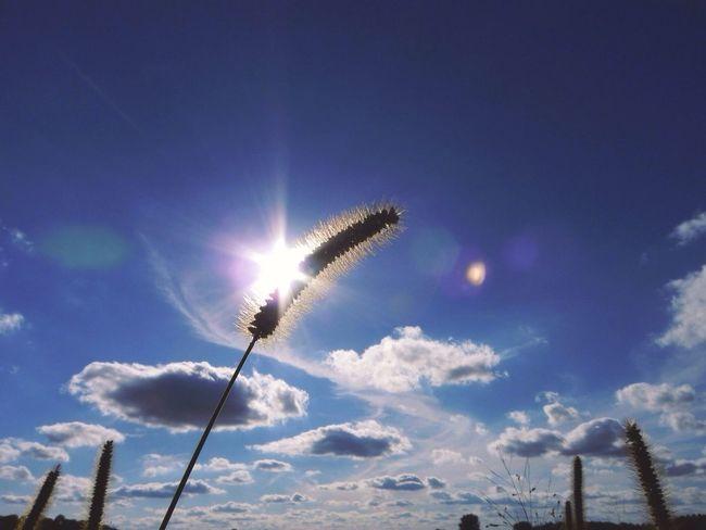 Light Up Your Life Wheat Sun Sun Flare