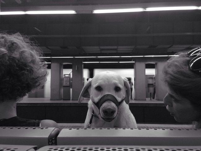 Cu cu Blackandwhite Subway Street Photography