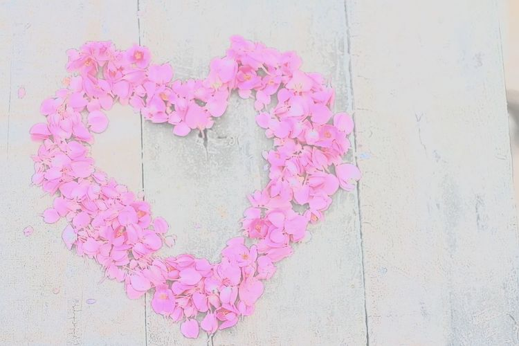 High angle view of pink flowers on wall