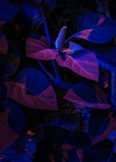 Close-Up Of Plants At Night
