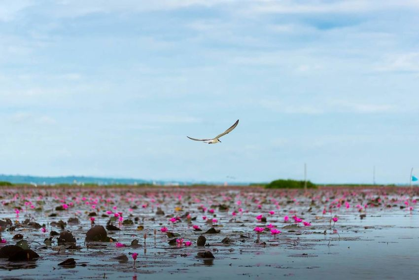 Freedoms Flower Nature Animal Wildlife Insect Plant Water Beauty In Nature Floating On Water Outdoors Flower Head Day Bird Bird Photography Lotus Flower Sky