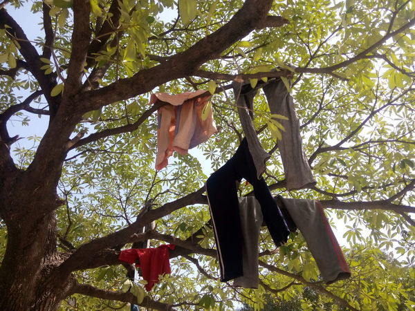 Hanging Low Angle View Tree Growth Branch Clothesline Day Chores Outdoors Nature Freshness Creative Check This Out