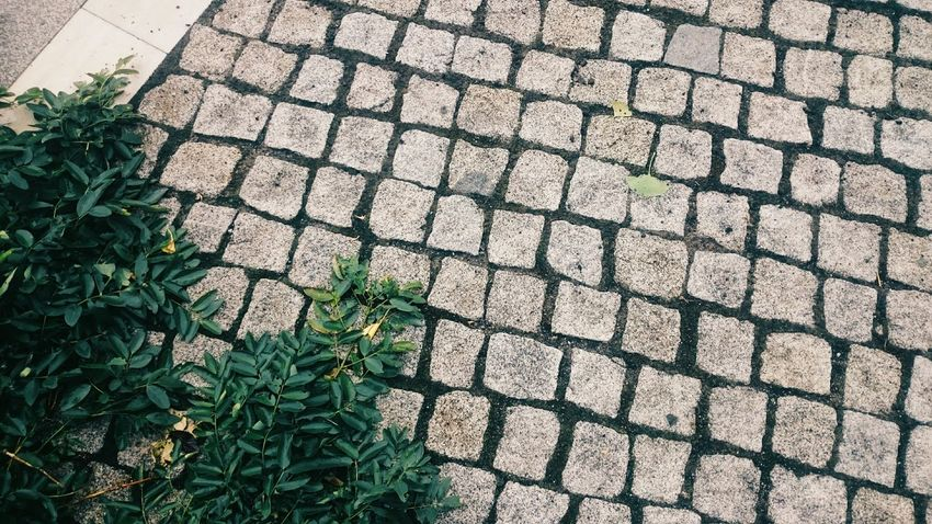 Leaf Plant High Angle View Footpath Paving Stone Nature No People Green Pedestrian Walkway Streetphotography Outdoors Leaf Plant High Angle View Growth Footpath Day Paving Stone Outdoors Nature No People Green Pedestrian Walkway Rainy Days Simplicity