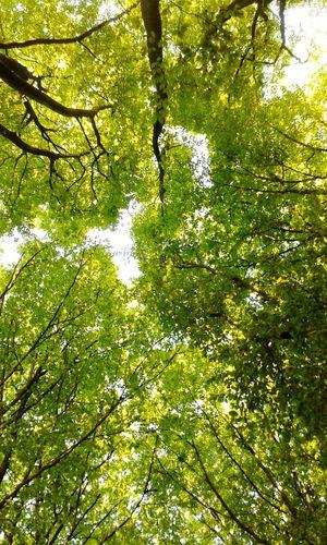Tree Trees Sun