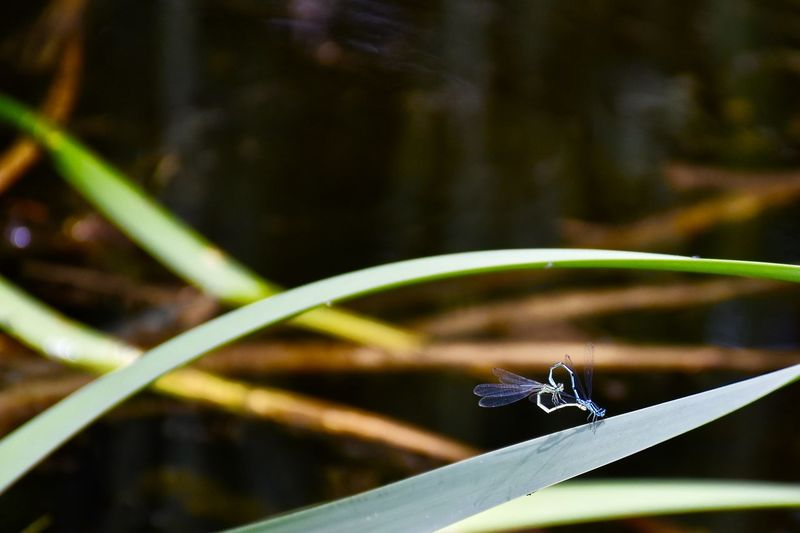 Close-up of water drop on grass