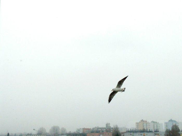 Bird Fly Sky