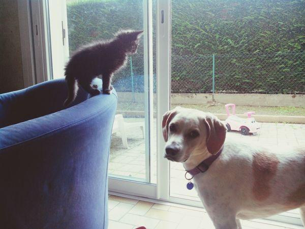 Dog Cat Cute Pets Friends
