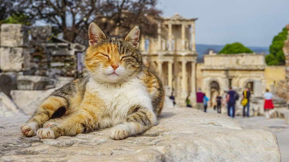 Cats of Ephesus Ancient Animal Animal Themes Architecture Building Exterior Built Structure Domestic Animals Domestic Cat Efes Ephesus Ephesus - Turkey EyeEm Best Shots Izmir One Animal Outdoors Pets Sony A6000 Travel Travel Destinations Turkey EyeEm EyeEmNewHere Pet Portraits