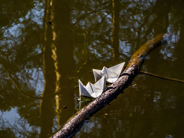 High angle view of paper boats floating in lake